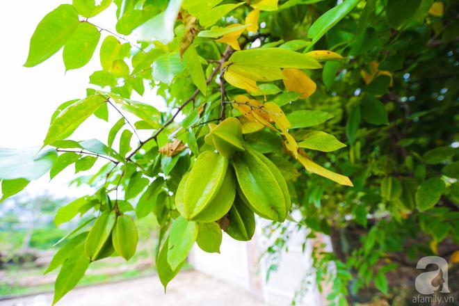 Ngôi nhà vườn xanh mát bóng cây của nữ giảng viên đại học chỉ cách Hà Nội 30 phút chạy xe - Ảnh 25.