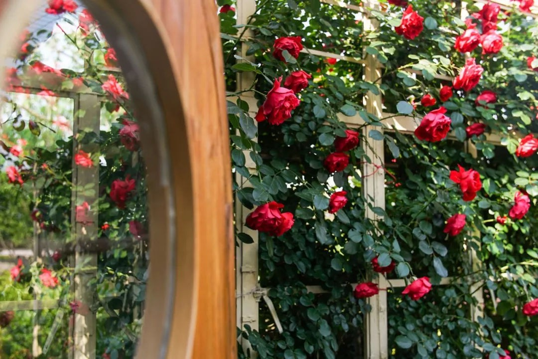 Ngôi nhà vườn rộng 4000m² đẹp bình yên được cải tạo từ mảnh đất toàn rác nhờ sự đồng lòng của hai vợ chồng bỏ phố về quê - Ảnh 3.